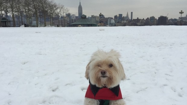 STAY FROSTY: Hoboken Cold Weather Survival Guide