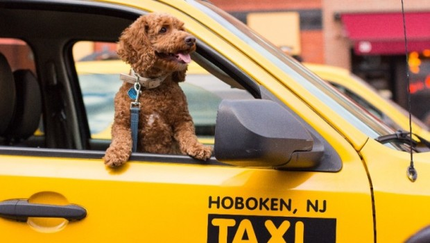 Photographer Working on Book of Hoboken Dogs